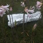 Envoltorio en papel de aluminio de mis piernas.<br /><em>Foil wrapper of my legs.</em>